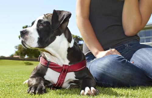 196-Successful-Dog-Training