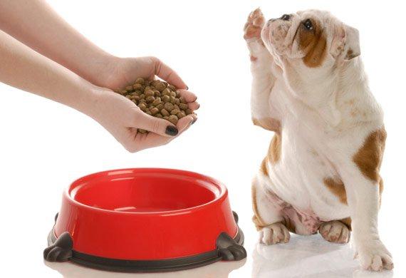 dog-food-bowl-97866345